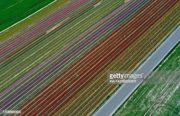 This picture shows an aerial view of a tulip field as the sun shines in Grevenbroich, western Germany, on April 14, 2020.