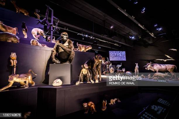 This picture shows animals presentations at the Naturalis Biodiversity Center, a national museum of natural history and research center on...