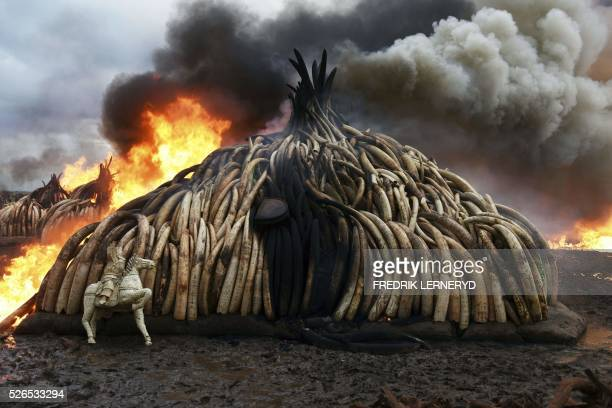 TOPSHOT This picture shows one stack of burning elephant tusks ivory figurines and rhinoceros horns at the Nairobi National Park on April 30 2016...