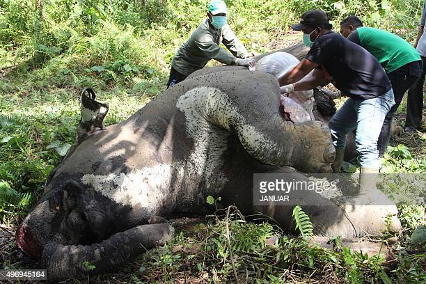 This picture taken in East Aceh on November 12 2015 shows officers from the Indonesian Conservation of Natural Resources Agency conducting an autopsy...