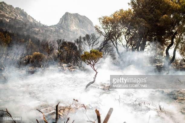 This picture taken near in Thrakomakedones, near Mount Parnitha, north of Athens, on August 7, 2021 shows a destroyed hill after the forest fire. -...