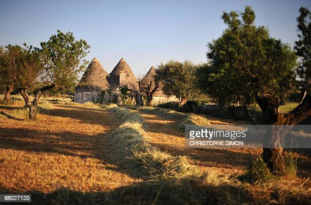 This picture taken on 21 May 2009 shows old 'trulli' houses in a field near the village of Arberobello in the southern region of Apulia The houses...