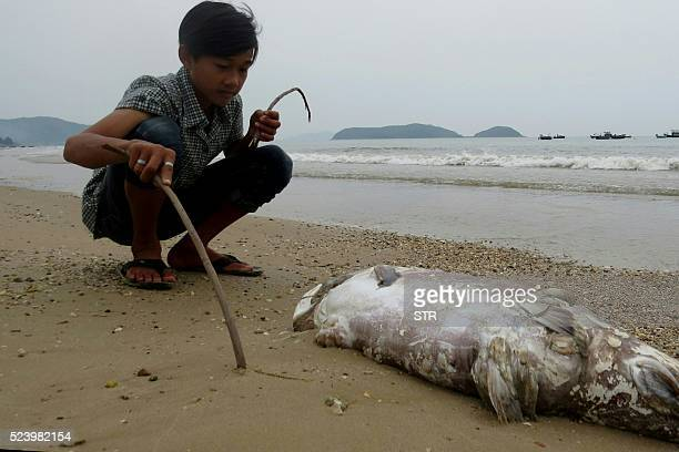 This picture taken on April 20 2016 shows a boy looking at a dead fish on a beach in Quang Trach district in the central coastal province of Quang...
