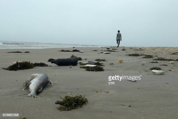 TOPSHOT This picture taken on April 20 2016 shows a man walking among dead fish lying on a beach in Quang Trach district in the central coastal...