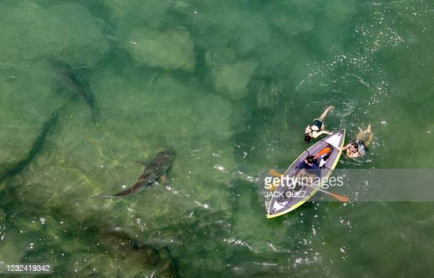 This picture taken on April 20, 2021 shows an aerial view of sharks swimming near an inflatable kayak in the shallow Mediterranean Sea water off the...