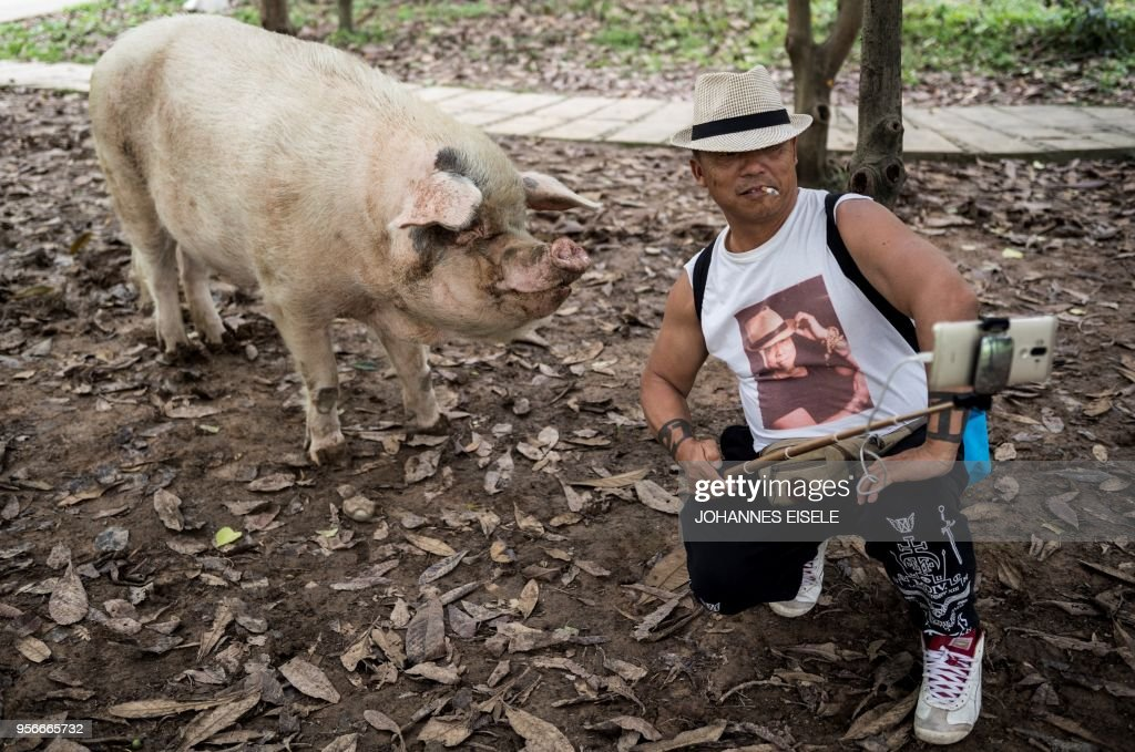 TOPSHOT - This picture taken on April 25, 2018 shows a tourist taking a selfie with a pig known as 'Zhu Jianqiang', who became a national icon after it survived the devastating earthquake 10 years ago, at a museum in Anren, Sichuan province. - The pig, known as 'Zhu Jianqiang' which means 'Strong Pig', shot to fame after he was discovered alive beneath rubble, 36 days after the 7.9-magnitude earthquake struck Sichuan province on May 12, 2008. (Photo by Johannes EISELE / AFP) / TO GO WITH China-quake-pig,FOCUS by Ben Dooley