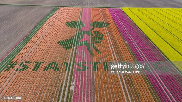 This picture taken on April 25 2020 shows a work of art made with 3 million tulips in a tulip field in Bant as the COVID19 crisis inspired the...