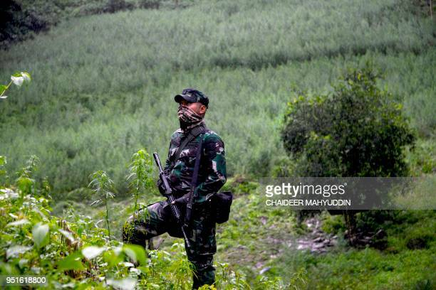 This picture taken on April 26 2018 shows an Indonesian policeman standing guard during a raid on a marijuana plantation in Indrapuri Aceh province...