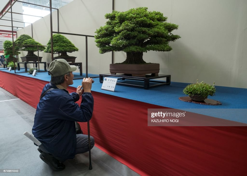 JAPAN-BONSAI-CONVENTION : News Photo