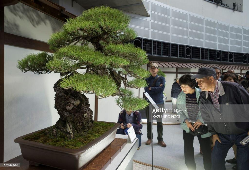 JAPAN-BONSAI-CONVENTION : News Photo