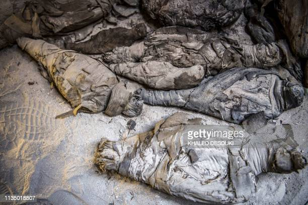 TOPSHOT This picture taken on April 5 2019 shows mummified animals found inside a newlydiscovered tomb dating to the Ptolemaic era at the Diabat...