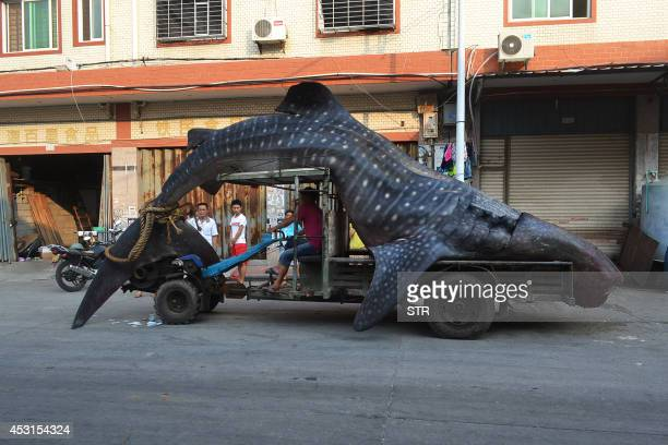 This picture taken on August 1 2014 shows a dead whale shark being carried on a tractor in a seafood wholesale market in Xiangzhi township in...