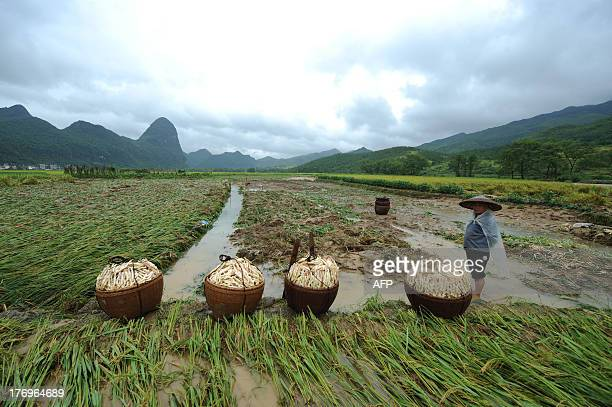 This picture taken on August 18, 2013 shows a villager standing on farmland after flooding hit Ningyuan county of Yongzhou, central China's Hunan...