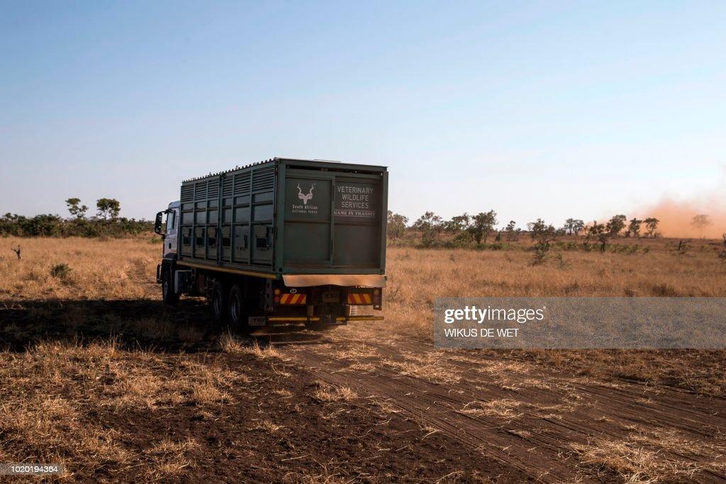 SAFRICA-WILDLIFE-CONSERVATION : News Photo