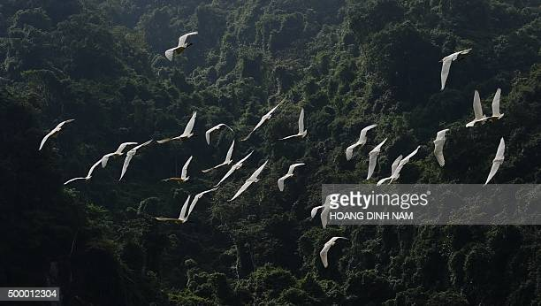 This picture taken on December 1 2015 shows storks flying over the national park Phong Nha Ke Bang in the central coastal province of Quang Binh AFP...
