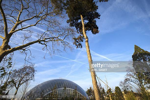 This picture taken on December 17 2013 shows Paris zoological parc also known as the Zoo of Vincennes's greenhouse in Paris five months before the...