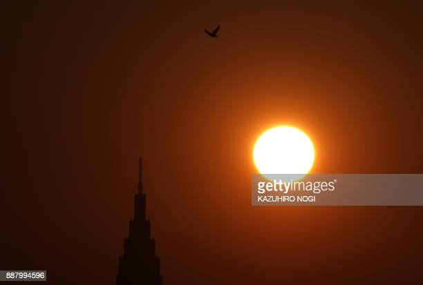 This picture taken on December 3 2017 shows a bird flying over a building at the sunset in Tokyo Japan is growing twice as fast as previously...