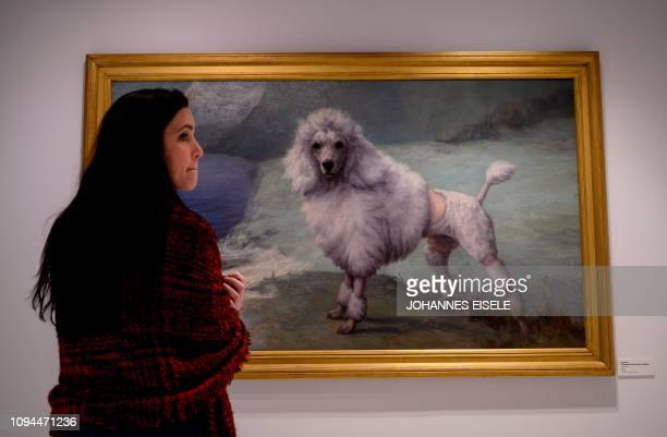 This picture taken on February 1 2019 in New York City shows a worker in The American Kennel Club Museum of the Dog looking at a painting Poodle by...