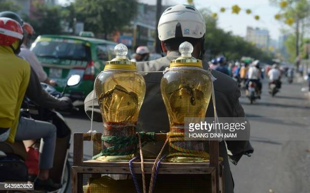 This picture taken on February 21 2017 shows a man riding a motorcycle with two big bottles of medicinal rice wine with cobras and scorpions for sale...