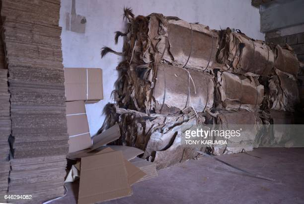 This picture taken on February 28 shows Donkey skins packed for export at a licensed specialised slaughterhouse in Baringo The emergence of the...