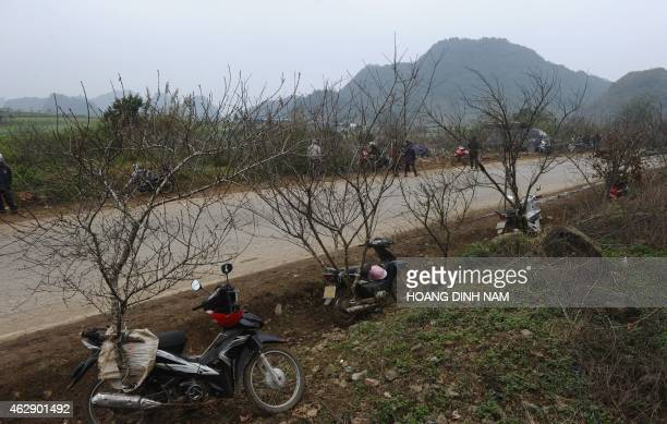 This picture taken on February 6 2015 shows peach blossoms tied up on motorcycles for the Lunar New Year celebrations along a road in Moc Chau...