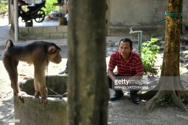 This picture taken on February 8 2018 shows a Malasyian man watching a pigtailed macaque outside trainer Wan Ibrahim Wan Mat's house in the village...