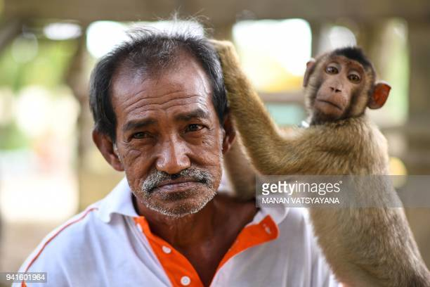 This picture taken on February 8 2018 shows a pigtailed macaque picking macaque trainer Wan Ibrahim Wan Mat's hair outside his house in the village...