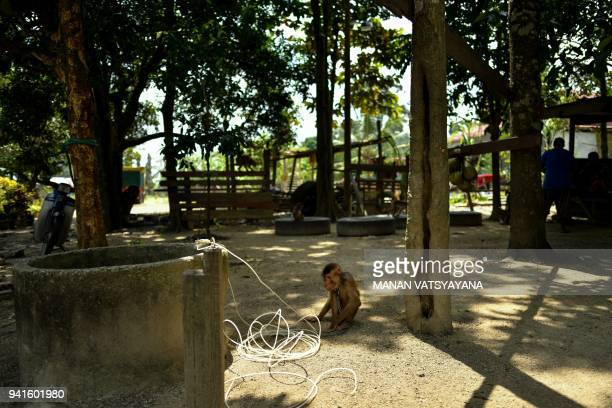 This picture taken on February 8 2018 shows a pigtailed macaque resting outside trainer Wan Ibrahim Wan Mat's house in the village of Melor in the...