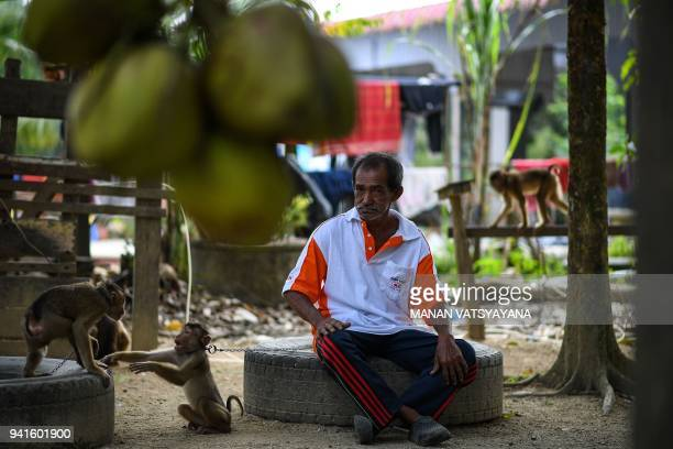 This picture taken on February 8 2018 shows macaquetrainer Wan Ibrahim Wan Mat sitting amidst pigtailed macaques outside his house in the village of...