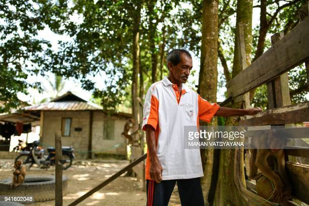 This picture taken on February 8 2018 shows macaquetrainer Wan Ibrahim Wan Mat training a pigtailed macaque to pick coconuts outside his house in the...