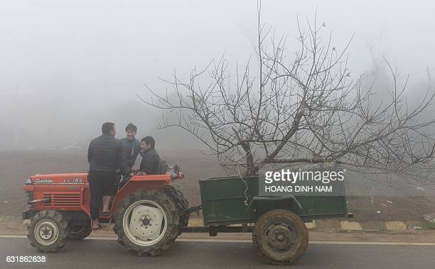 This picture taken on January 15 2017 shows people transporting a peach blossom plant on a tractor on their way to a roadside market to sell it as...