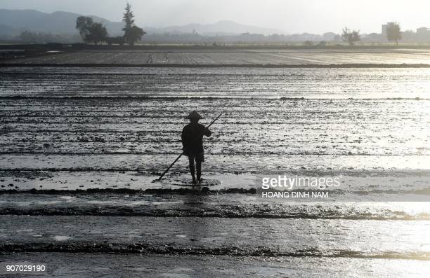 TOPSHOT This picture taken on January 17 2018 shows a farmer working in a rice field on the outskirts of the central Vientamese city of Hue / AFP...