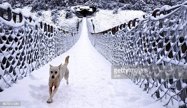 This picture taken on January 23 2016 shows a dog running across a snowcovered bridge on Shenxianju Mountain near the city of Taizhou in eastern...