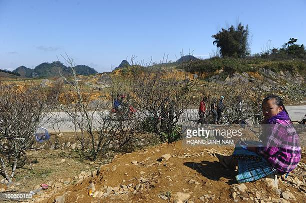 This picture taken on January 29 2013 shows a young H'Mong hilltribe girl sitting selling peach blossom branches next to a highway in northen...