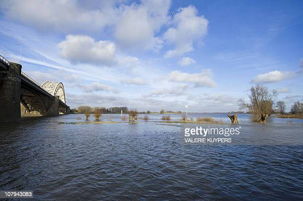 This picture taken on January 9 2011 shows trees in flood waters of a Dutch river De Waal The water in De Waal reached a high level The government...