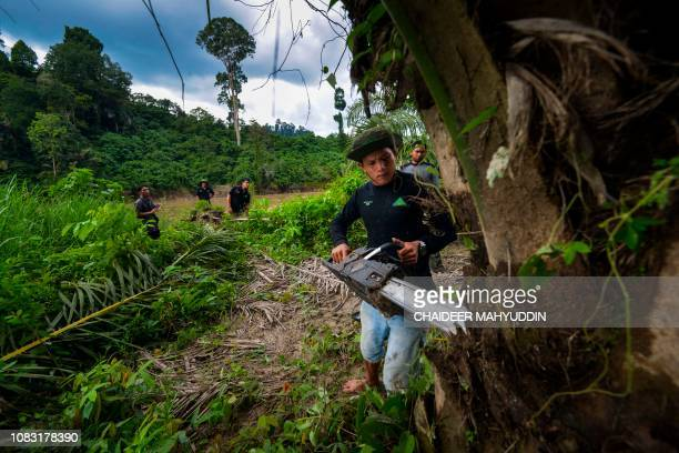 This picture taken on January 9 2019 shows Indonesian rangers cutting down illegal palm oil trees within the protected Leuser ecosystem rainforest in...