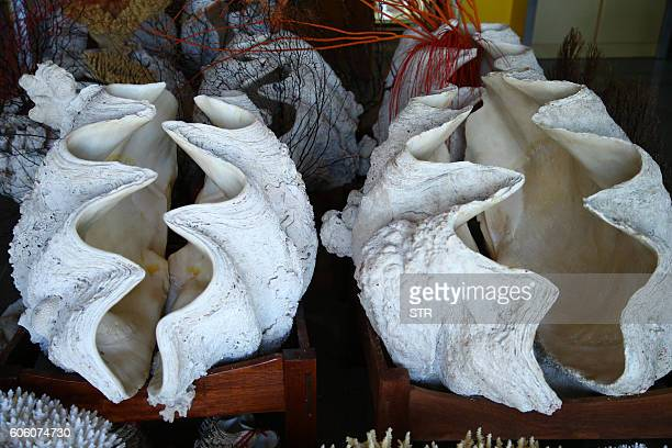 This picture taken on July 19 2013 shows giant clams on display in Tanmen in China's southern Hainan Province CHINA OUT AFP PHOTO / AFP / STR