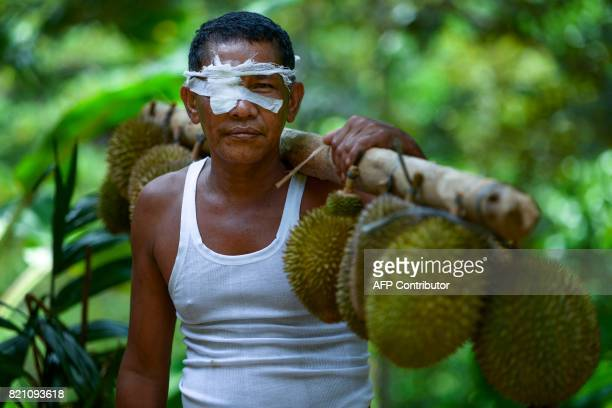 This picture taken on July 22 2017 shows a villager carrying durian fruits from a farm in Lhoong Aceh province Durians a highly prized fruit in...