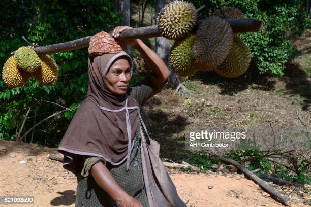 This picture taken on July 22 2017 shows a woman carrying durian fruits from a farm in Lhoong Aceh province Durians a highly prized fruit in...