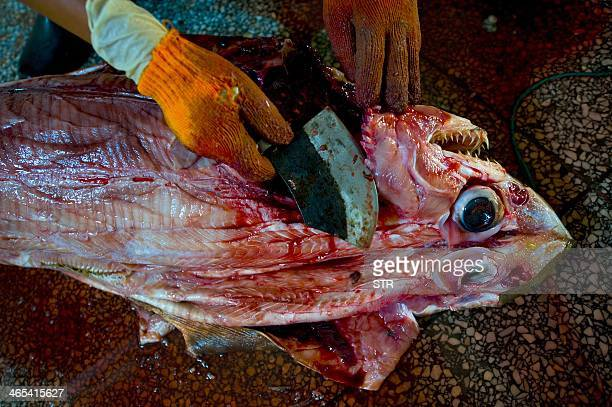 This picture taken on July 26 2011 shows a Chinese worker cleaning the slaughtered sharks at a processing factory located in Pu Qi in China's...