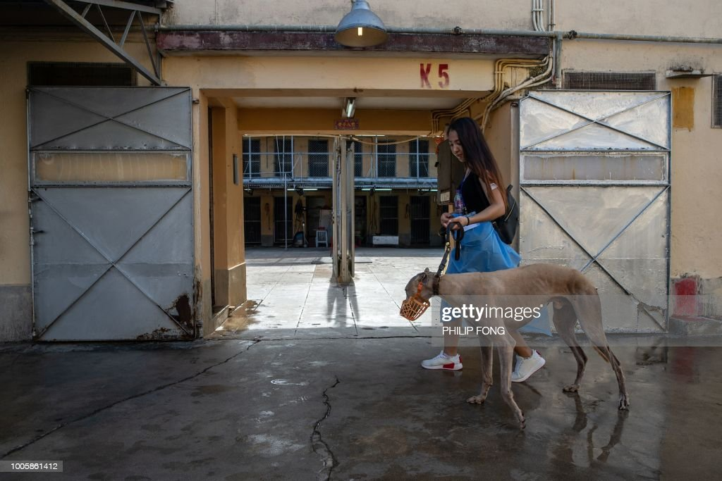 This picture taken on July 26, 2018 shows a volunteer walking with a greyhound at the shut down Canidrome Club in Macau, which was Asia's only legal dog-racing track. - First opened in 1931, the track's closure on July 21, 2018 was a victory for those who had spent years criticising its treatment of the animals. (Photo by Philip FONG / AFP) / TO GO WITH Macau-sport-animal-greyhounds,Focus by Laura MANNERING