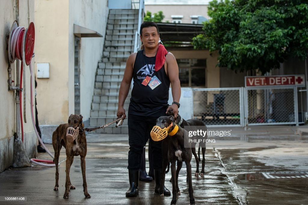 This picture taken on July 26, 2018 shows a volunteer walking with greyhounds at the shut down Canidrome Club in Macau, which was Asia's only legal dog-racing track. - First opened in 1931, the track's closure on July 21, 2018 was a victory for those who had spent years criticising its treatment of the animals. (Photo by Philip FONG / AFP) / TO GO WITH Macau-sport-animal-greyhounds,Focus by Laura MANNERING