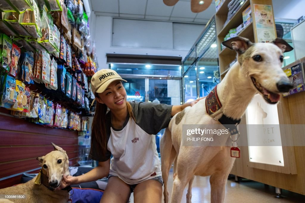 This picture taken on July 26, 2018 shows pet shop owner Fei Chan posing with her adopted female greyhounds Bobo (L), 9, and Choi Choi (R), 8, taken in after the closure of the Canidrome Club in Macau, which was Asia's only legal dog-racing track. - First opened in 1931, the track's closure on July 21, 2018 was a victory for those who had spent years criticising its treatment of the animals. The firm which operated the track, Yat Yuen, failed to rehome the animals ahead of the shutdown, despite being given two years' notice by authorities. (Photo by Philip FONG / AFP) / TO GO WITH Macau-sport-animal-greyhounds,Focus by Laura MANNERING