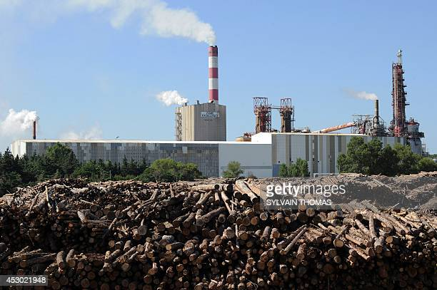 This picture taken on July 30, 2014 in Tarascon, shows wood at the site of the Fibre Excellence company, in Tarascon, southern France. The French...