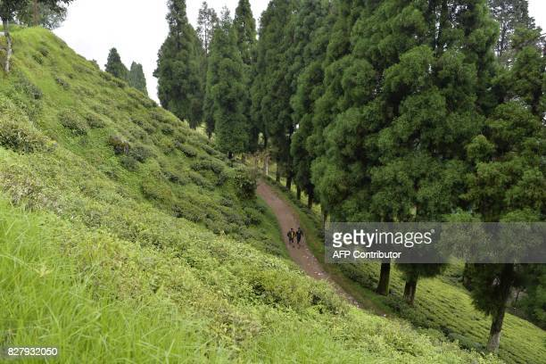 This picture taken on July 7 2017 shows people walking through the Happy Valley Tea Garden which is empty of workers during an indefinite strike in...