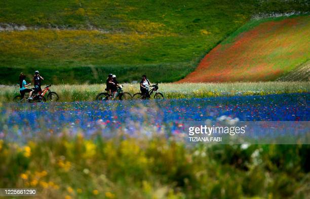 This picture taken on July 8, 2020 shows people cycling across blooming lentil fields and poppy flowers near Castelluccio, a small village in central...