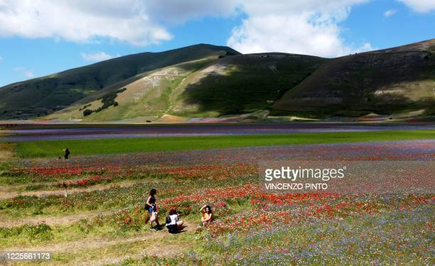 This picture taken on July 8, 2020 shows people walking in the middle of blooming lentil fields and poppy flowers near Castelluccio, a small village...