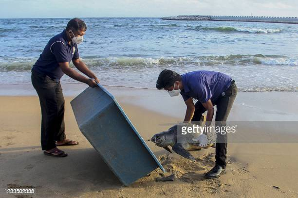 This picture taken on June 10 shows wildlife officials removing the carcass of a sea turtle washed ashore at Galle Face beach in Colombo, as dozens...