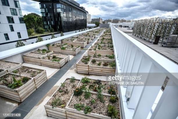 This picture taken on June 15, 2020 shows a view of the biggest urban farm in Europe installed on a roof top at the Porte de Versailles exhibition...