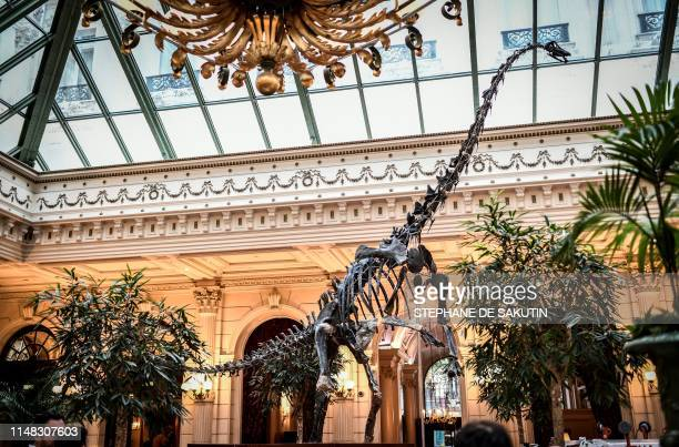 This picture taken on June 6 2019 shows the skeleton of 'Skinny' the dinosaur displayed at the reception room of the Grand Hotel in Paris as this...
